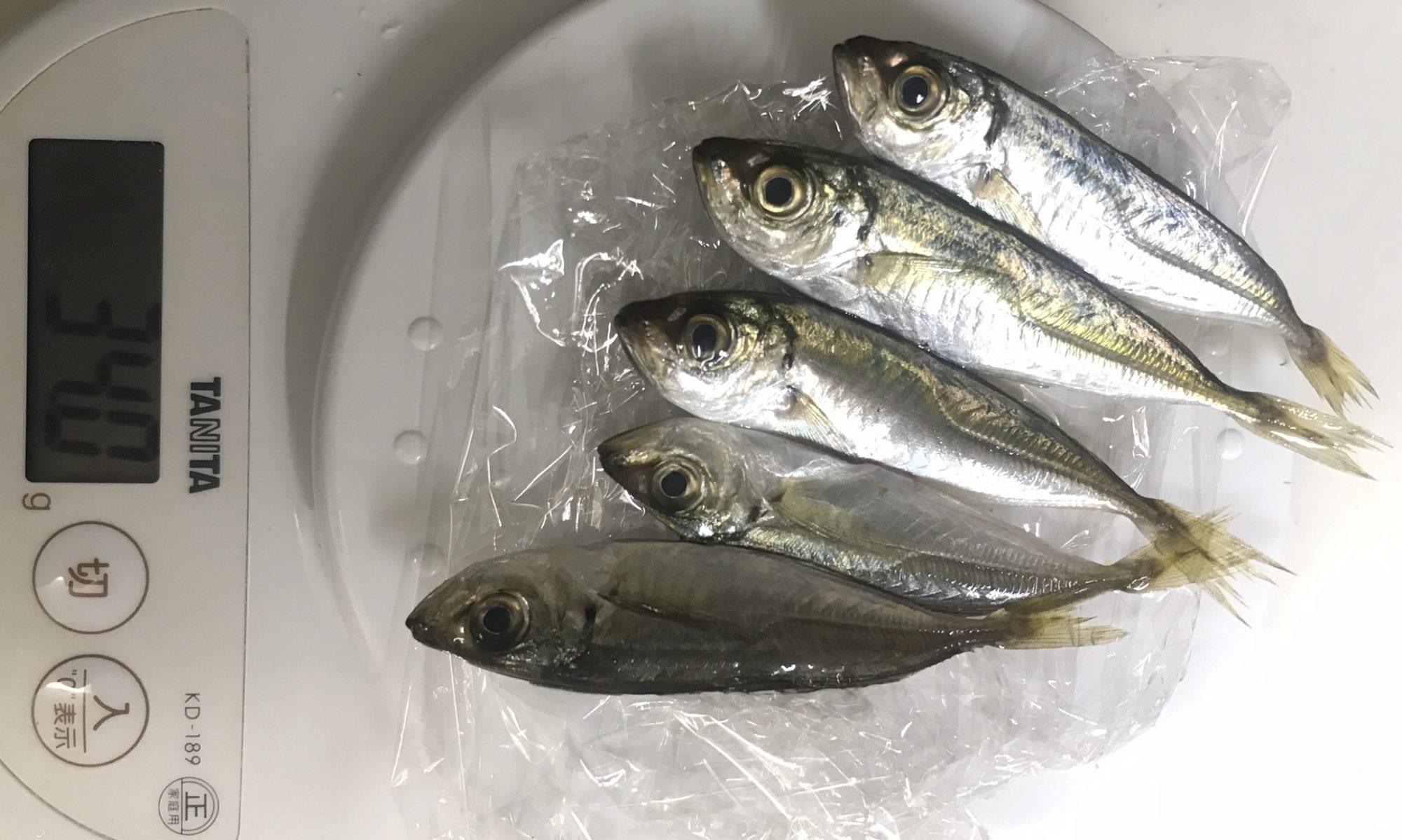 魚が消えていく本当の理由